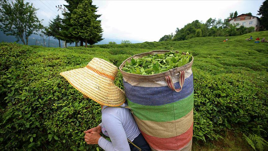 Türk çayını 2020'de en çok Belçika talep etti